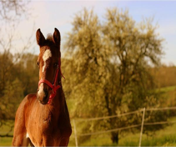 Wie auch Pferde von CBD profitieren können