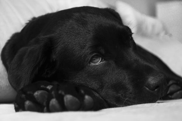 CBD für Hunde mit Arthrose