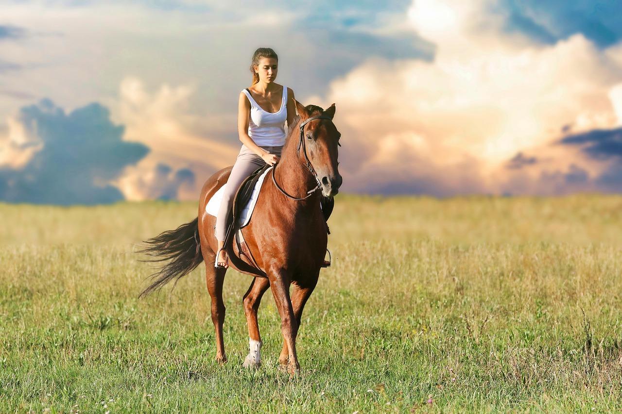 CBD Öl für das Pferd