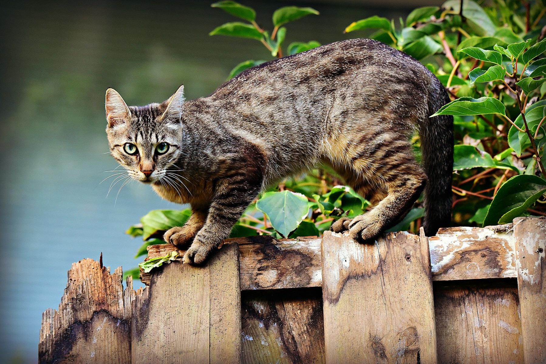 Katze auf Gartenzaun CBD Nature