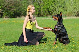 Behandlung von Hunden bei CBD
